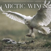 Arctic Wings Book Cover