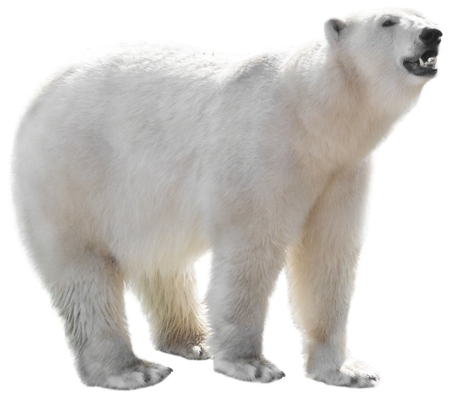 protect-the-arctic-img-bear